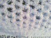 Icy blast 17/01/13 pretty formation on chicken wire