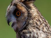 North Somerset Bird of Prey Centre Open Day