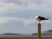 seagull on town beach