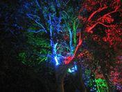 Colour Trees in West Ham Lane Stratford