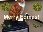 Merry Christmas from Eddie the cat