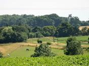 Views across Burgh