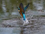 Birds at Lackford Lakes, Suffolkwildlife Trust