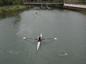 Rowers in River Orwell - followed by a Seal