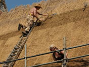 Keeping Traditional Reed Thatching Skills Alive in Norfolk