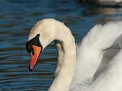 Taken at whitlingham great broad