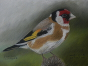 my wildlife drawings using pastel