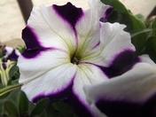 Flowers in contrast
