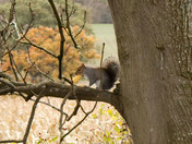 Squirrel, Canal side