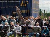 Falconry Display Long Stratton 60th Jubilee