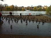 Ducks in Diss