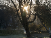 all taken on a cold ,frosty jan morning early!