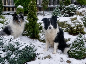 Tanzi and Ellie in the snow.