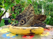 Wildlife caught around Weston-super-Mare and the North Somerset Butterfly House