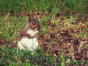 Cheeky and lovable Squirrels