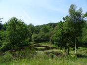 The lake at Offwell Woods on a hot sunny day