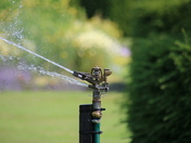 Its Watering Time