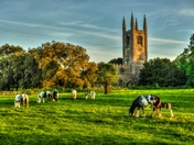 Conington horses