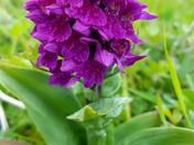 Summer Flowers Photo Challenge