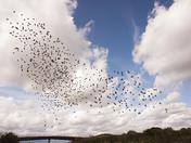 Raining birds
