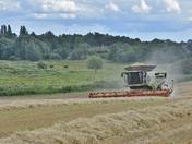 Marshland View Harvesting