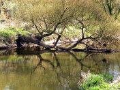 River Otter & Estuary