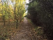 Autumnal Path leading to Thames Chase