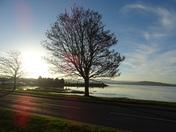 Sun shines through the trees at Exmouth Estuary.
