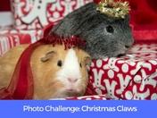PHOTO CHALLENGE: Christmas Claws