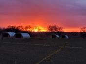 Sunset over Haveringland pig arcs