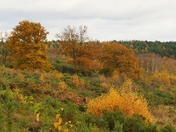 Beautiful Colours In Holt Country Park