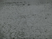 Carpet of Snow on grass