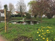 A spring view of Pond Walk