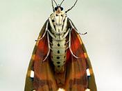 Unususal view of a moth