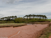 Budleigh Trees