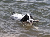 Swimming in the Estuary