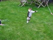 Cat - ching Practice!