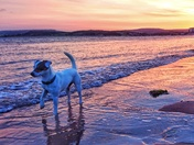 Late August Sunset on Exmouth Beach with Maddie in the fore ground.