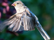 Flying sparrows