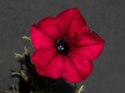 Photo challenge single flower