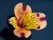 Photo challeng single flower