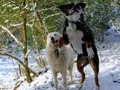 My black dog and white dog