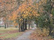 Late Autumn in Valentines Park.