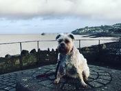 Lovely dog walk in clevedon