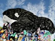 plastic pollution harming the ocean