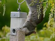 The (not so) wildlife in my garden!