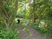 Walks in Norfolk