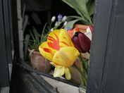 Flowers growing out of a window.