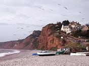 Raining seagulls
