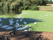 Harrow lodge park